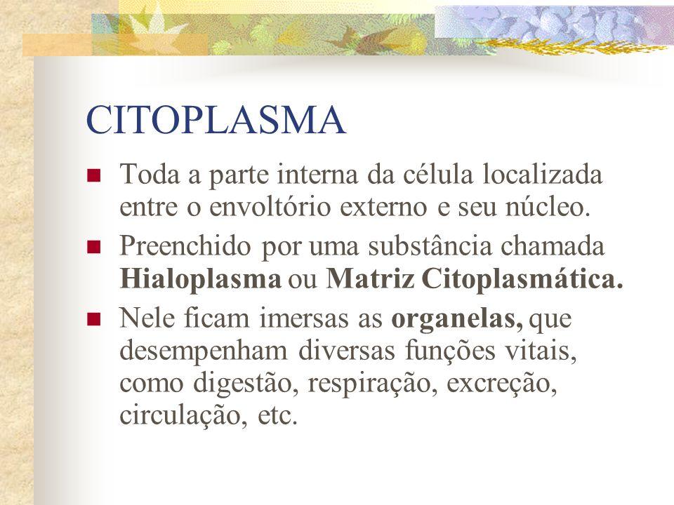 CITOPLASMA Toda a parte interna da célula localizada entre o envoltório externo e seu núcleo.