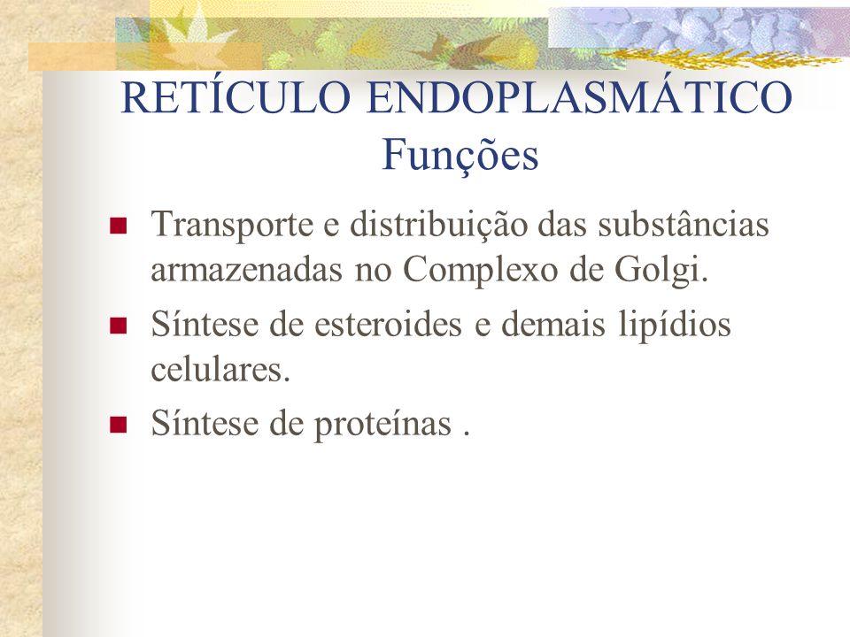 RETÍCULO ENDOPLASMÁTICO Funções