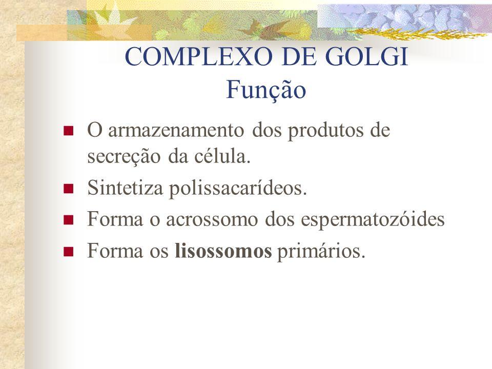 COMPLEXO DE GOLGI Função