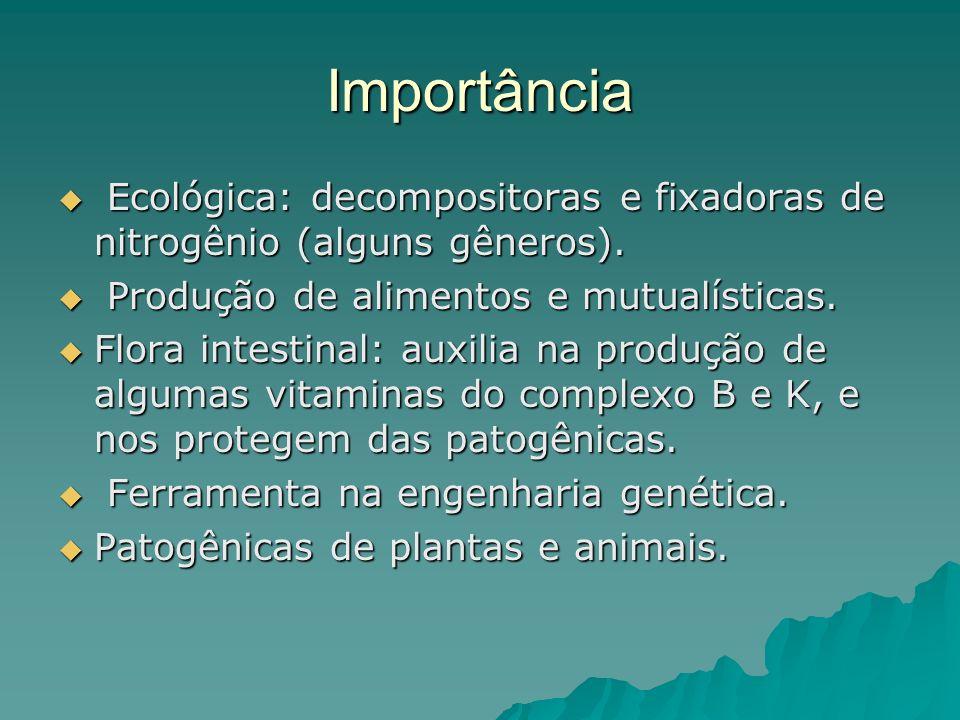 Importância Ecológica: decompositoras e fixadoras de nitrogênio (alguns gêneros). Produção de alimentos e mutualísticas.