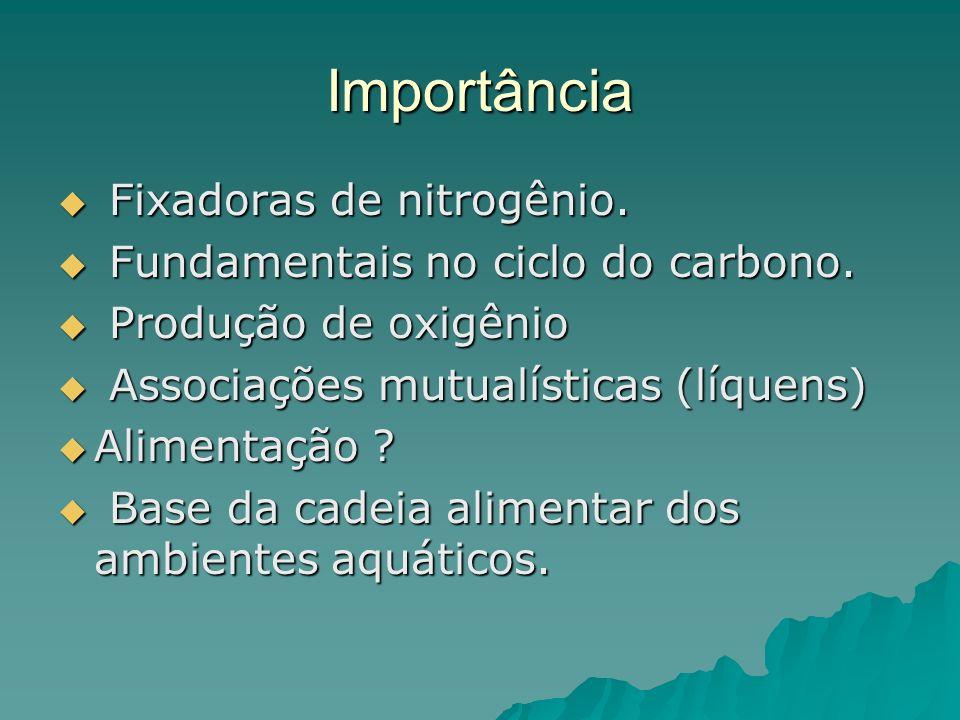 Importância Fixadoras de nitrogênio. Fundamentais no ciclo do carbono.