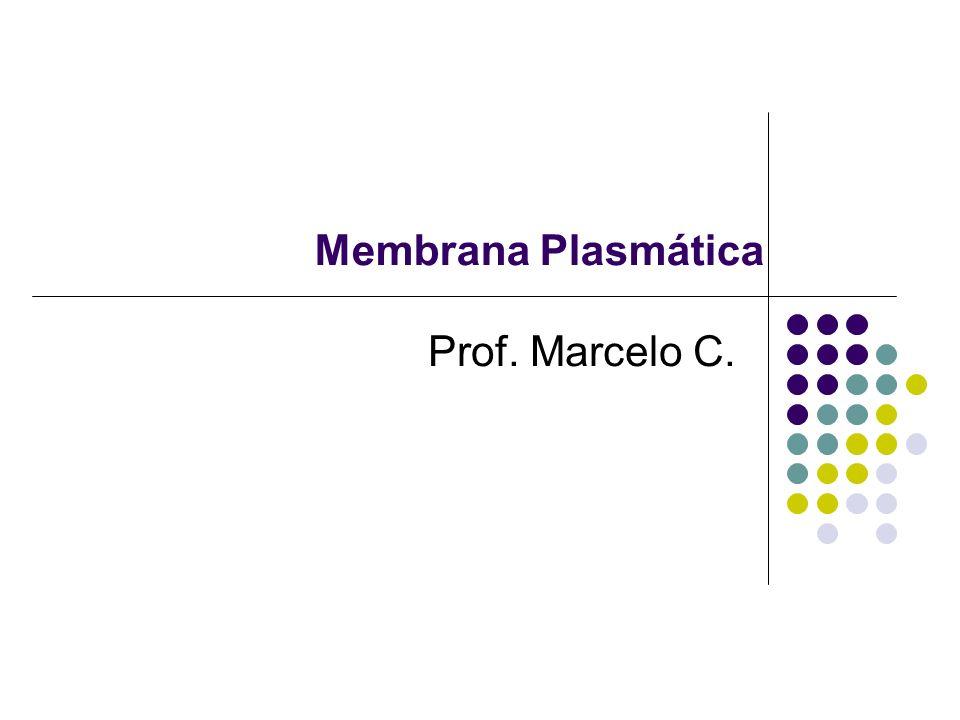 Membrana Plasmática Prof. Marcelo C.