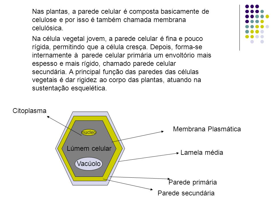 Nas plantas, a parede celular é composta basicamente de celulose e por isso é também chamada membrana celulósica.