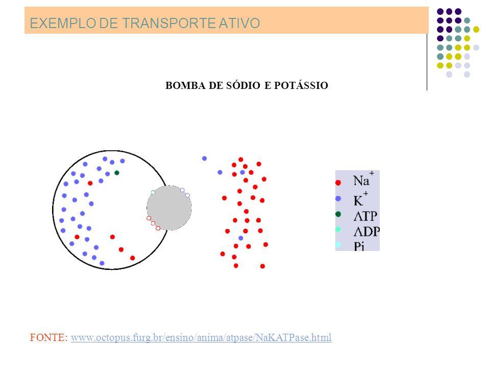 EXEMPLO DE TRANSPORTE ATIVO