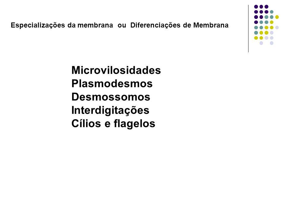 Microvilosidades Plasmodesmos Desmossomos Interdigitações