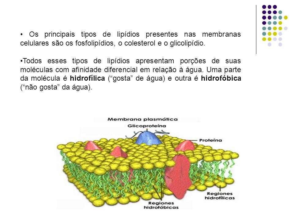 Os principais tipos de lipídios presentes nas membranas celulares são os fosfolipídios, o colesterol e o glicolipídio.
