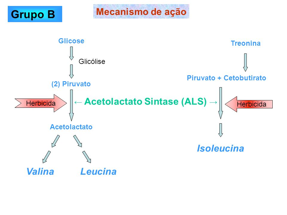 Grupo B Mecanismo de ação Valina Leucina