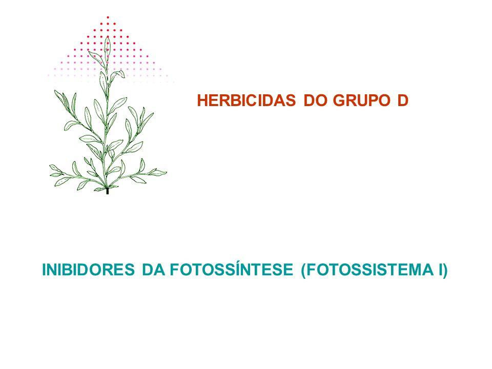 HERBICIDAS DO GRUPO D INIBIDORES DA FOTOSSÍNTESE (FOTOSSISTEMA I)