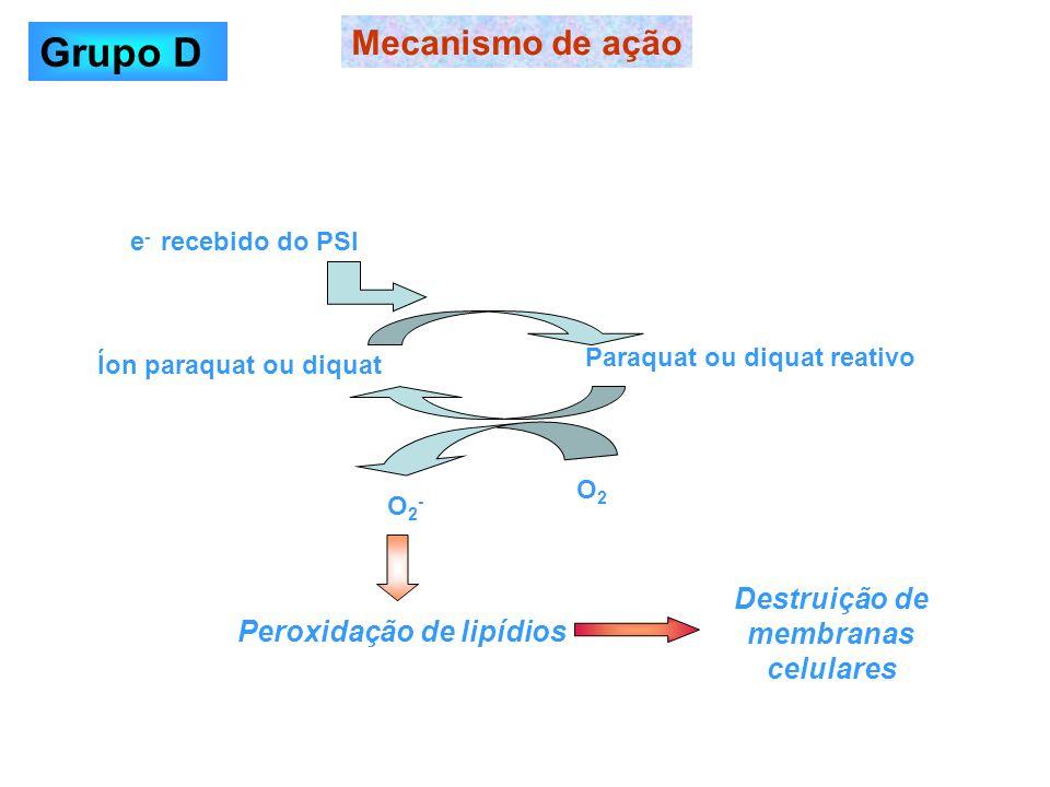 Paraquat ou diquat reativo Destruição de membranas celulares