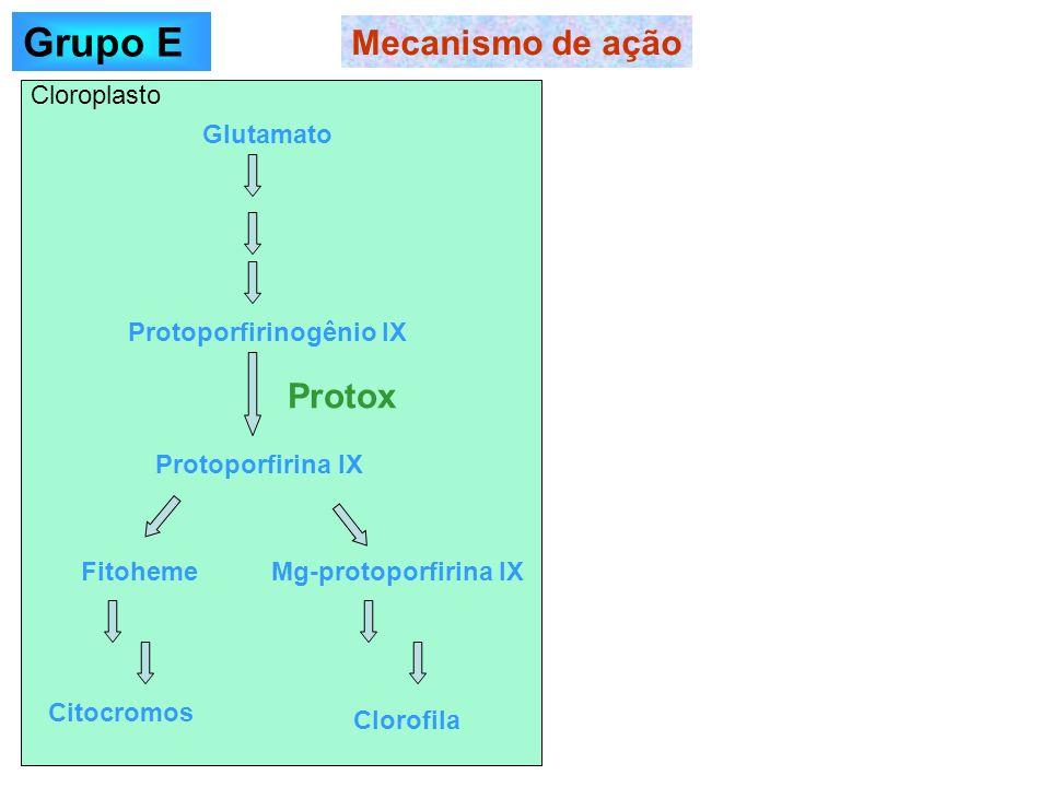 Grupo E Mecanismo de ação Protox Cloroplasto Glutamato