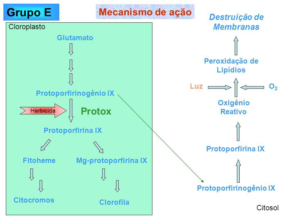 Grupo E Mecanismo de ação Protox Destruição de Membranas Cloroplasto