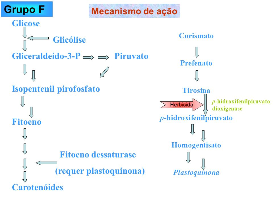 p-hidroxifenilpiruvato