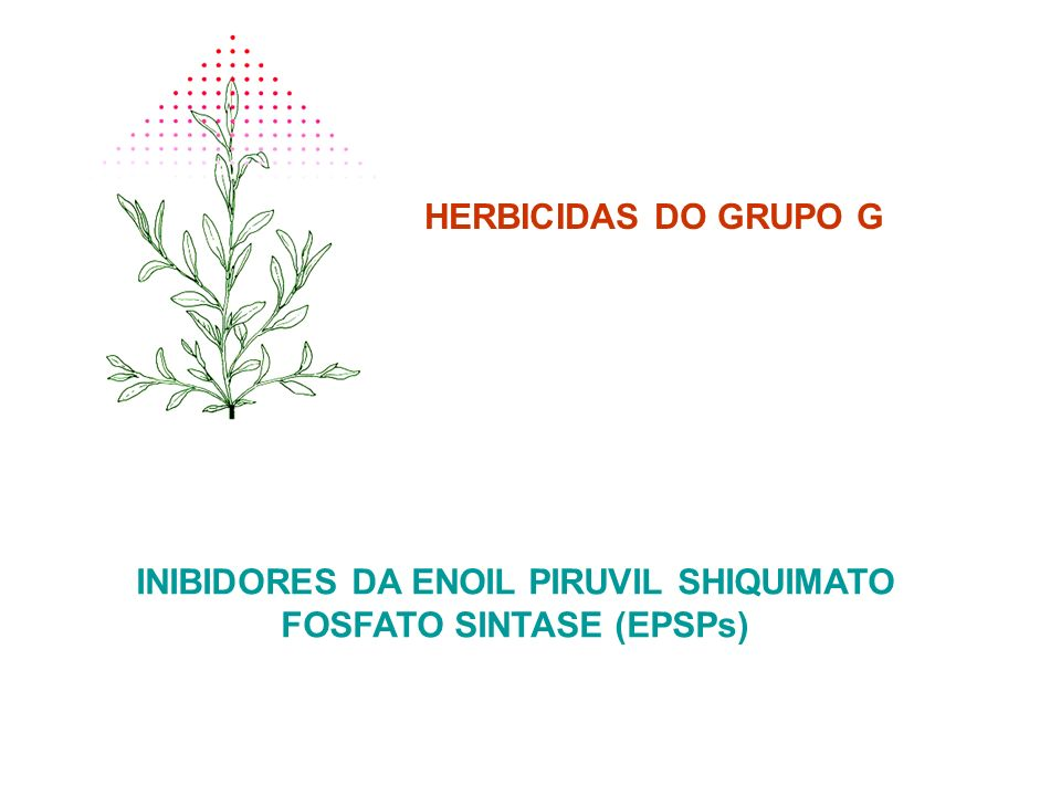 INIBIDORES DA ENOIL PIRUVIL SHIQUIMATO FOSFATO SINTASE (EPSPs)