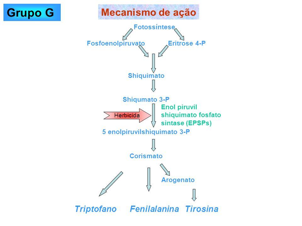 Grupo G Mecanismo de ação Triptofano Fenilalanina Tirosina