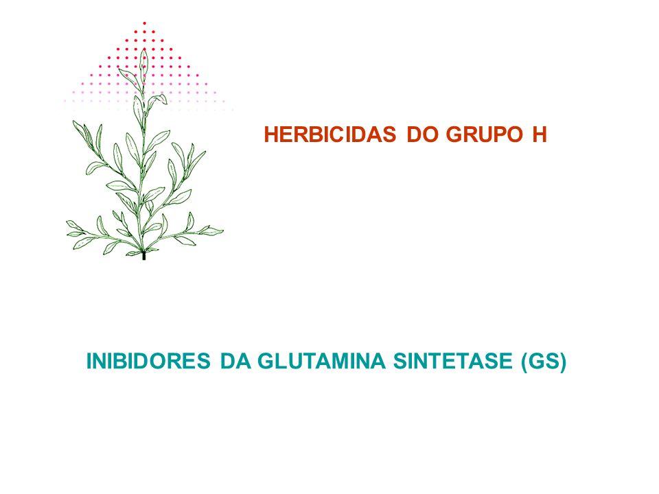 INIBIDORES DA GLUTAMINA SINTETASE (GS)