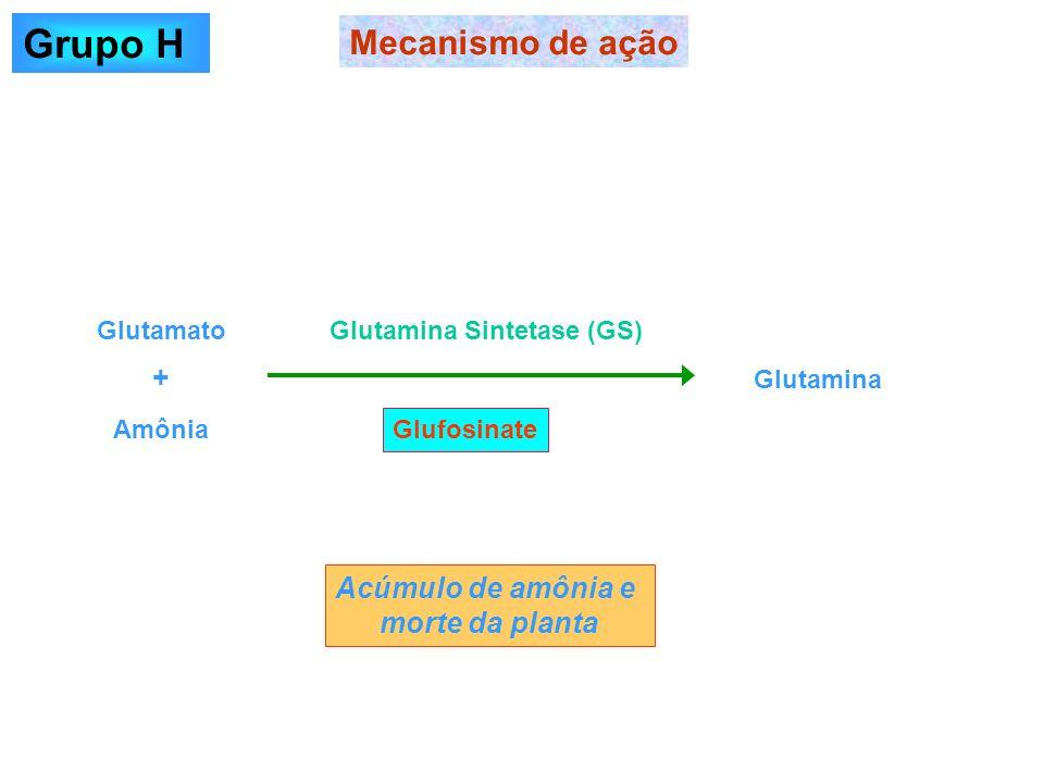 Grupo H Mecanismo de ação + Acúmulo de amônia e morte da planta