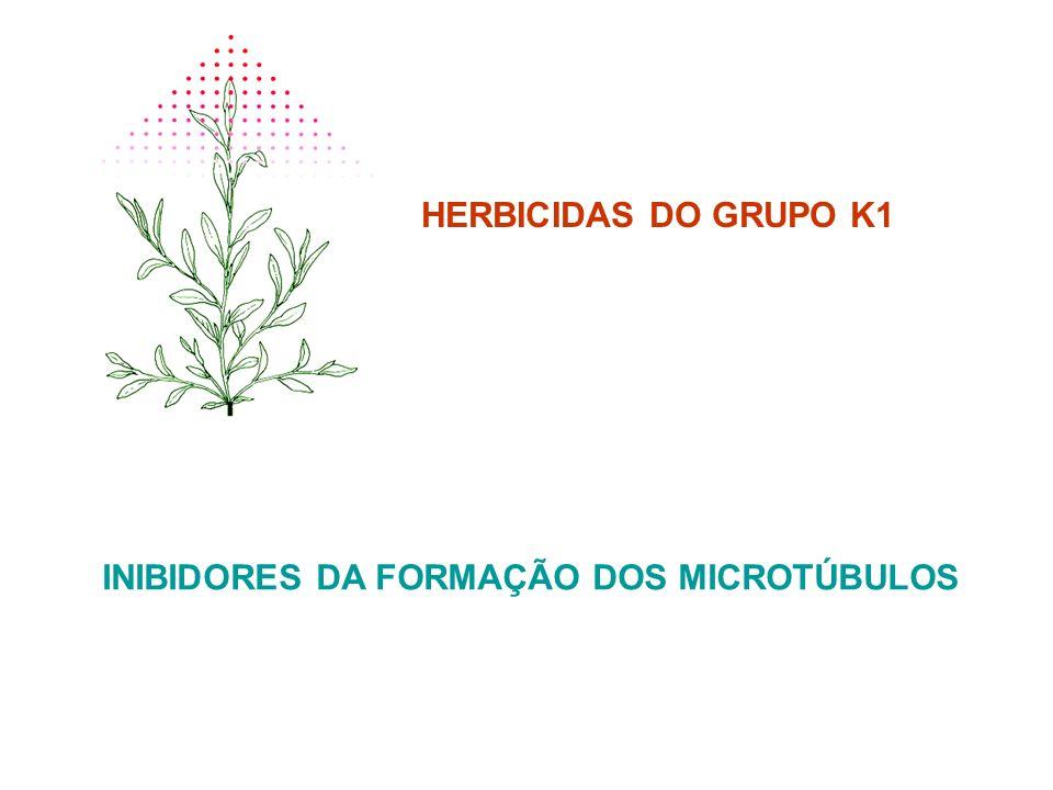 INIBIDORES DA FORMAÇÃO DOS MICROTÚBULOS