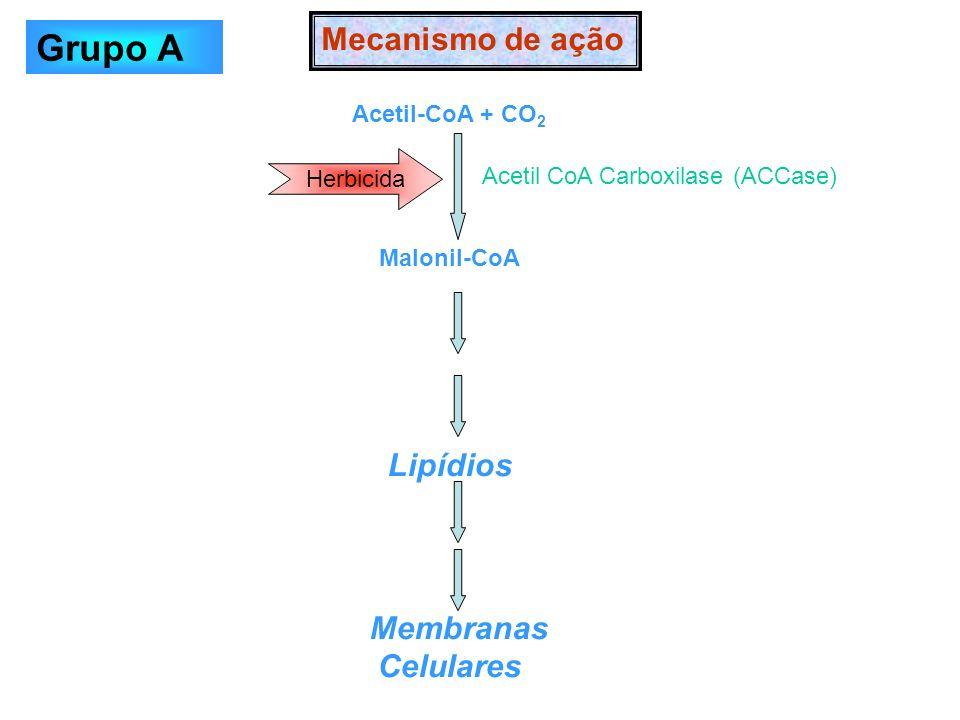 Grupo A Mecanismo de ação Lipídios Membranas Celulares