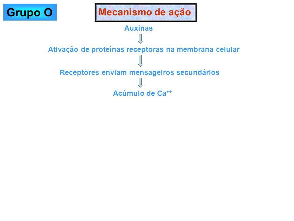 Grupo O Mecanismo de ação Auxinas