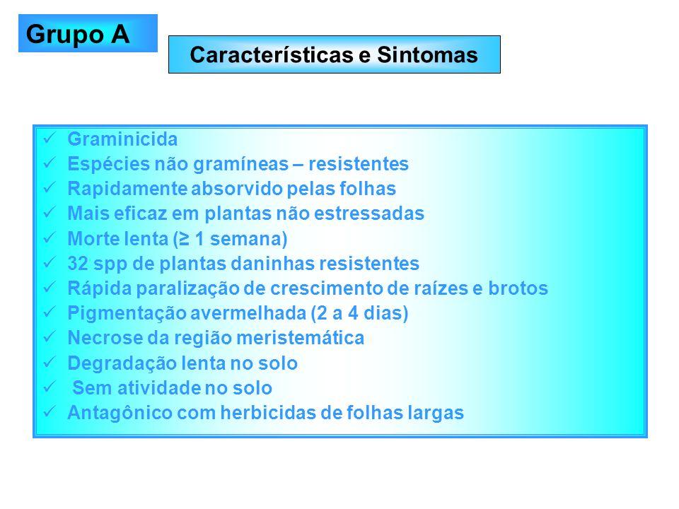 Características e Sintomas