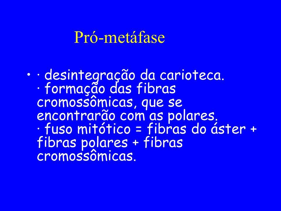 Pró-metáfase
