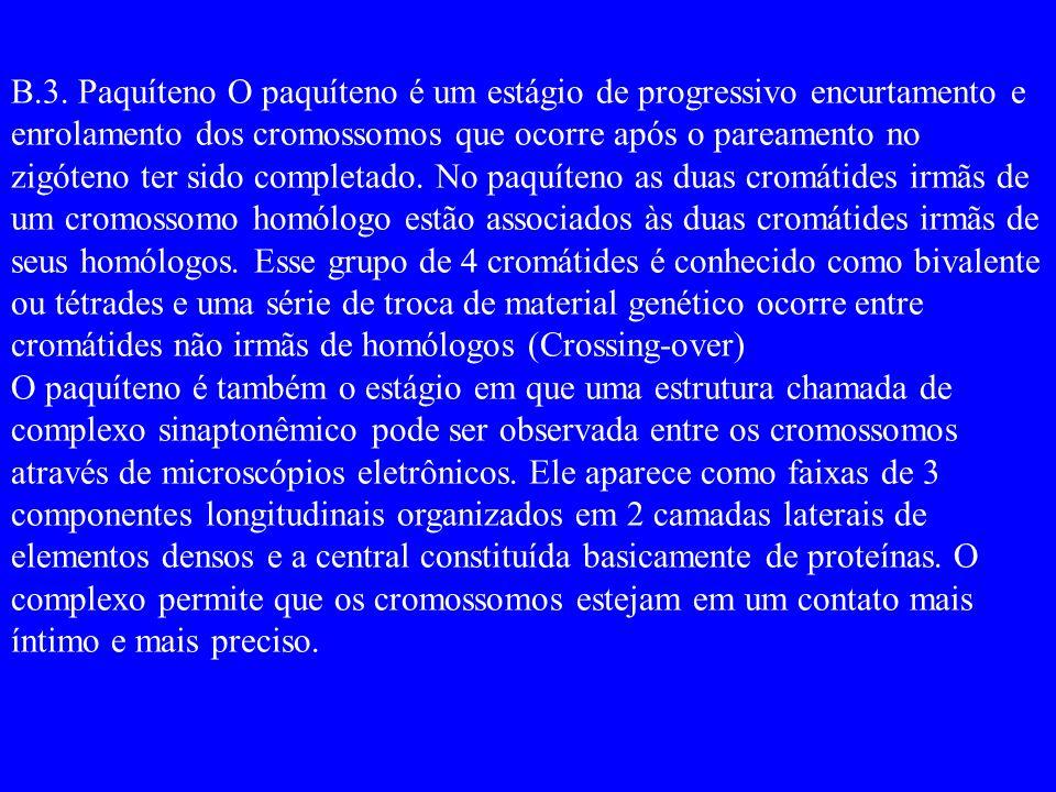 B.3. Paquíteno O paquíteno é um estágio de progressivo encurtamento e enrolamento dos cromossomos que ocorre após o pareamento no zigóteno ter sido completado. No paquíteno as duas cromátides irmãs de um cromossomo homólogo estão associados às duas cromátides irmãs de seus homólogos. Esse grupo de 4 cromátides é conhecido como bivalente ou tétrades e uma série de troca de material genético ocorre entre cromátides não irmãs de homólogos (Crossing-over)