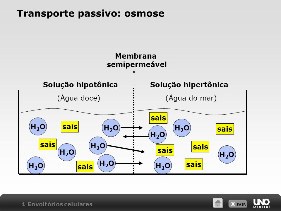 Transporte passivo: osmose