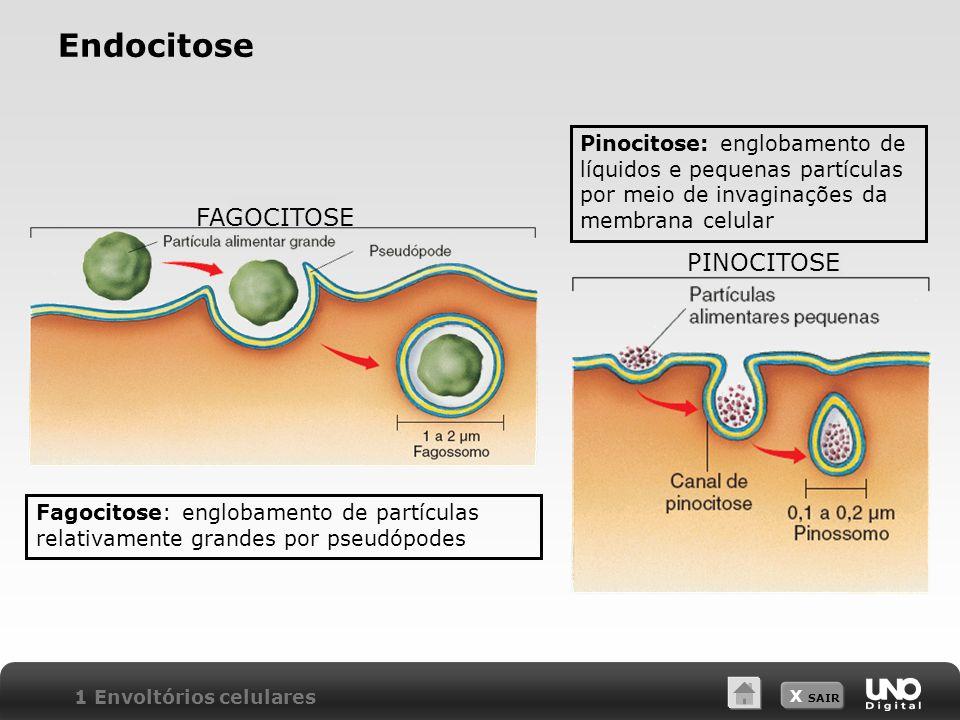 Endocitose FAGOCITOSE PINOCITOSE