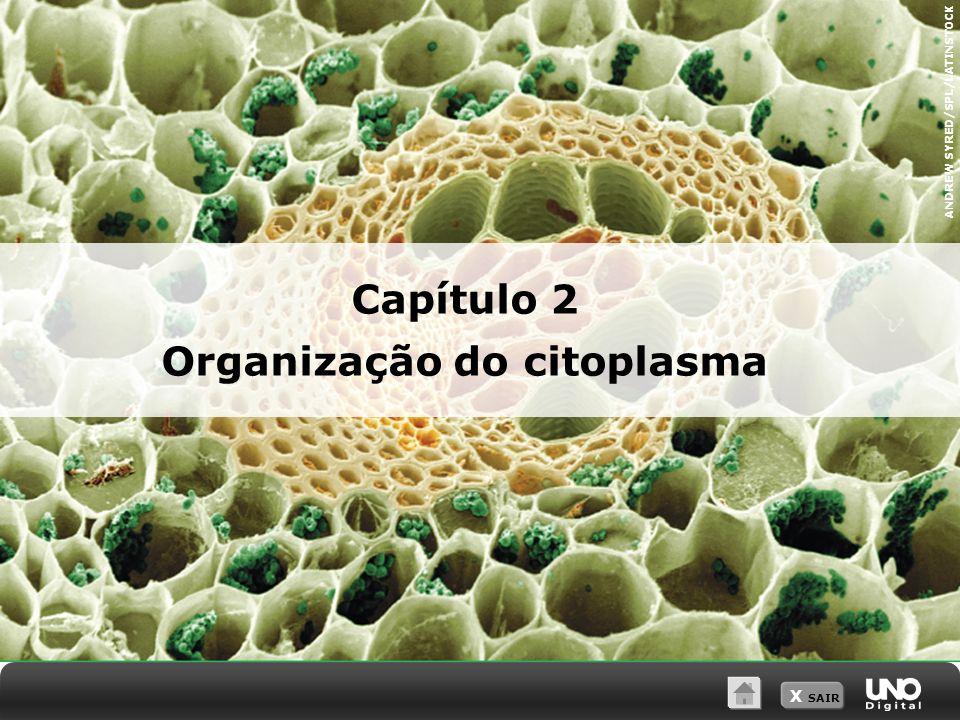 Organização do citoplasma