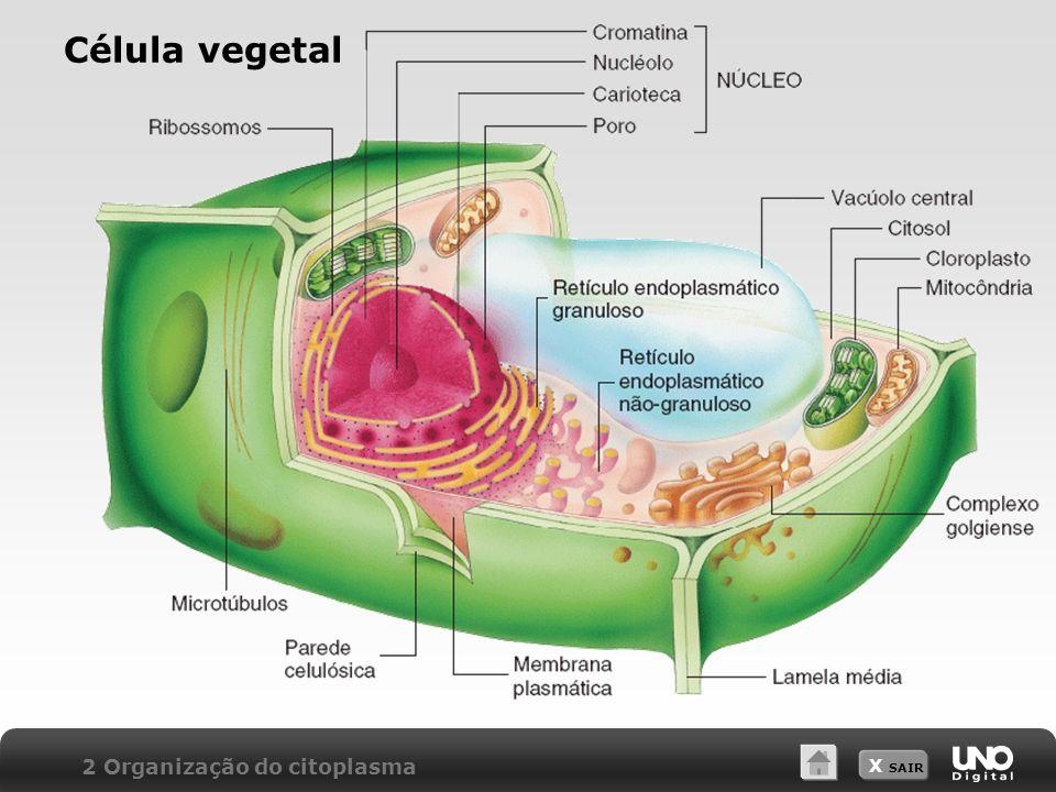Célula vegetal 2 Organização do citoplasma