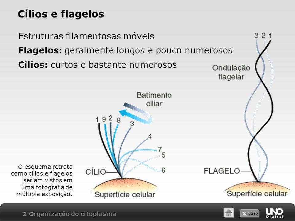Cílios e flagelos Estruturas filamentosas móveis
