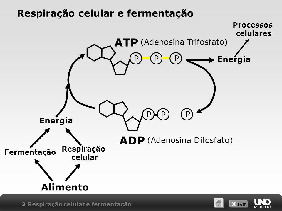 Respiração celular e fermentação