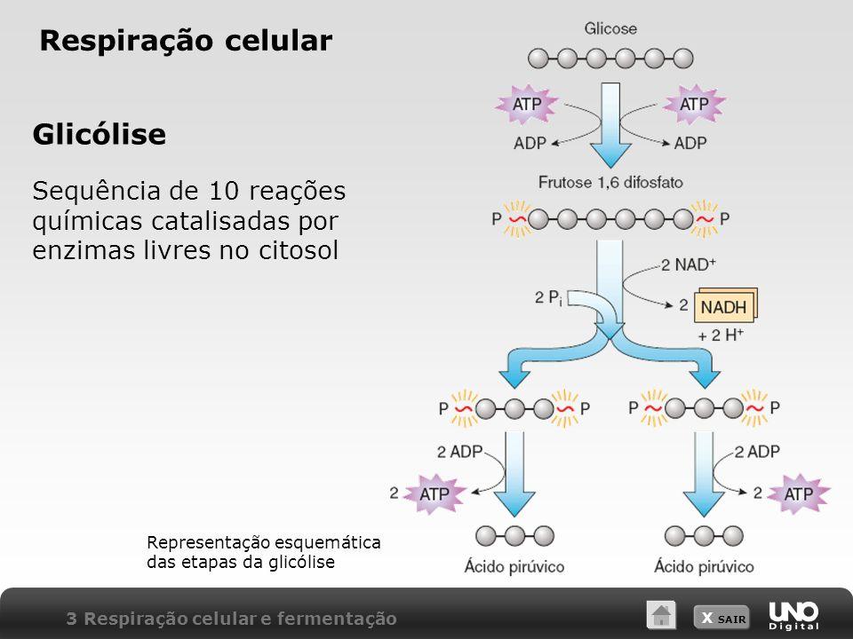 Respiração celular Glicólise