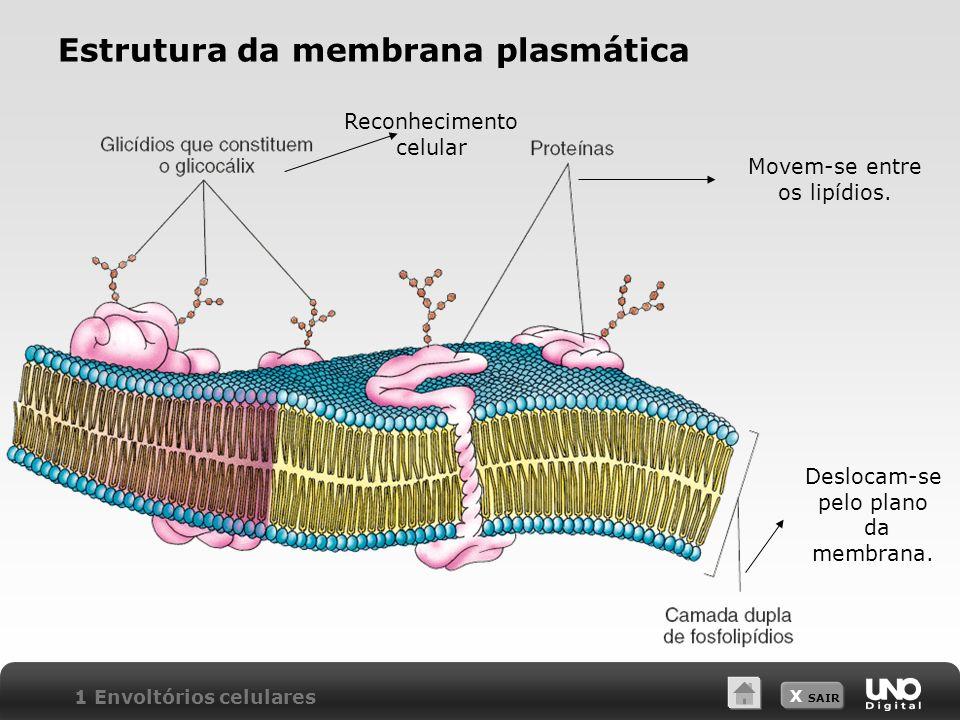 Estrutura da membrana plasmática