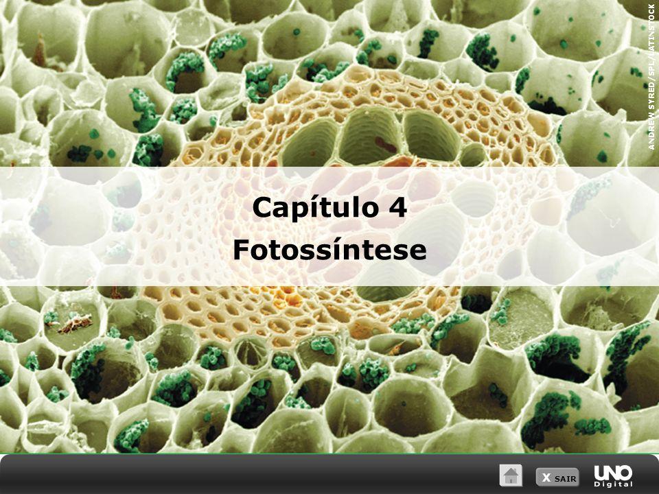 Capítulo 4 Fotossíntese