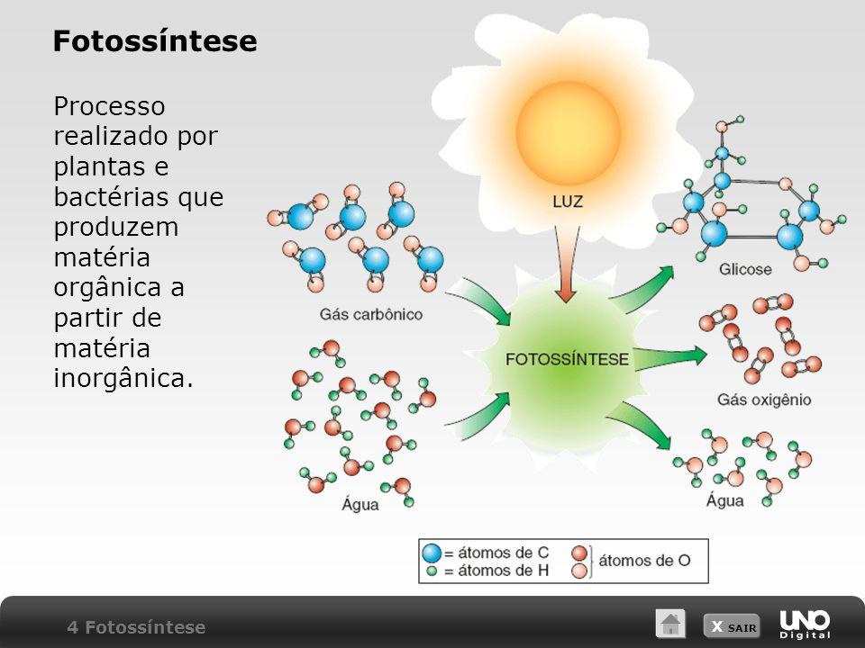 Fotossíntese Processo realizado por plantas e bactérias que produzem matéria orgânica a partir de matéria inorgânica.