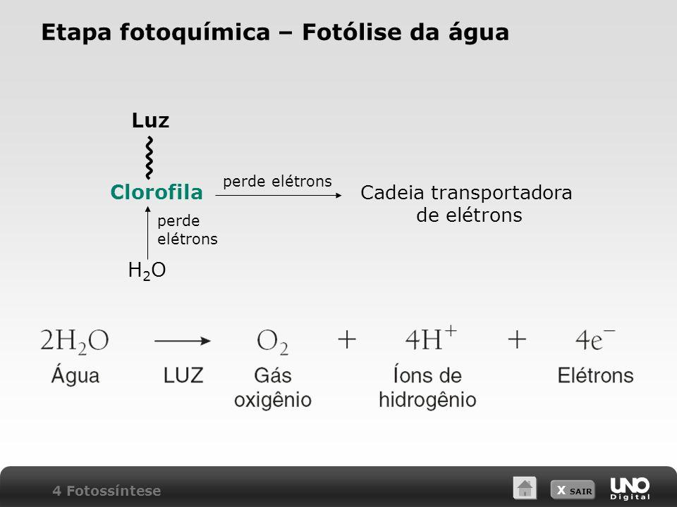 Etapa fotoquímica – Fotólise da água