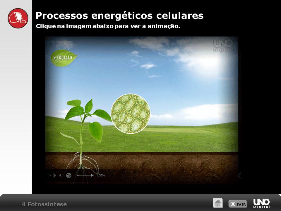 Processos energéticos celulares