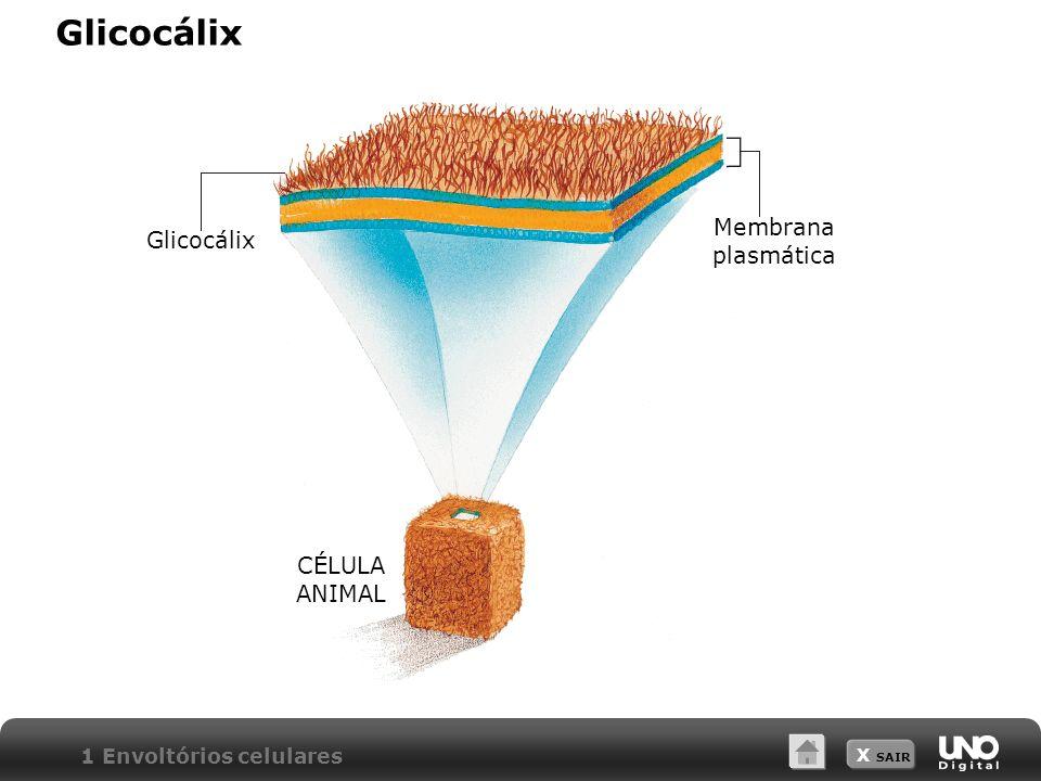 Glicocálix Membrana plasmática Glicocálix CÉLULA ANIMAL