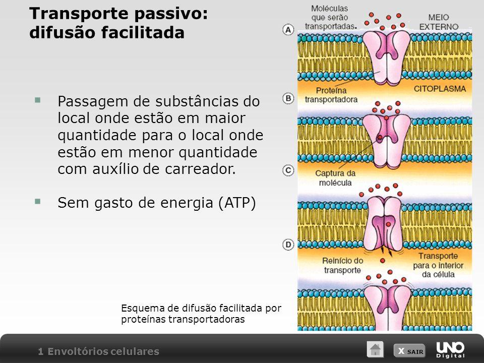 Transporte passivo: difusão facilitada