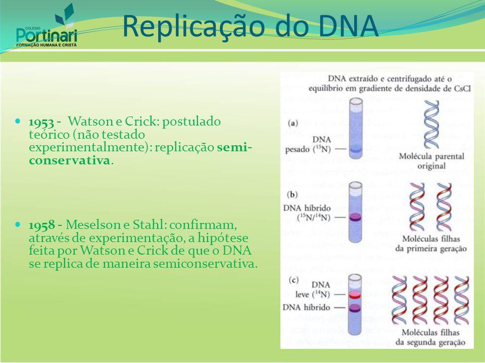 Replicação do DNA 1953 - Watson e Crick: postulado teórico (não testado experimentalmente): replicação semi-conservativa.