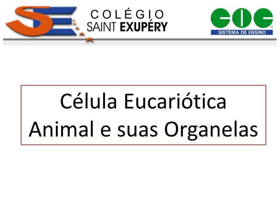Célula Eucariótica Animal e suas Organelas
