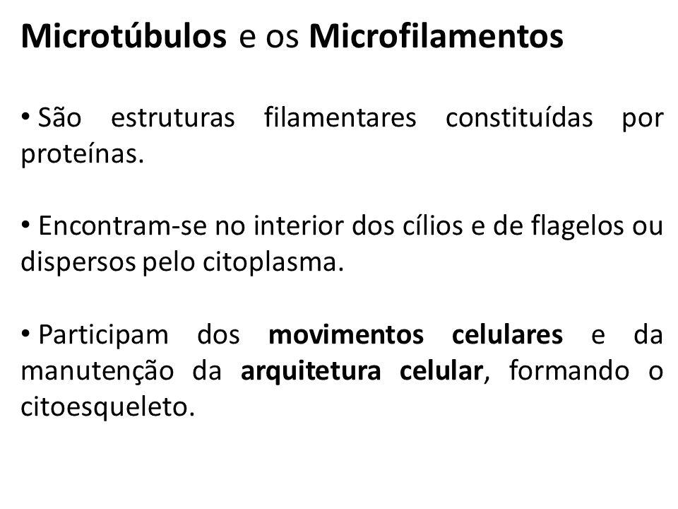 Microtúbulos e os Microfilamentos