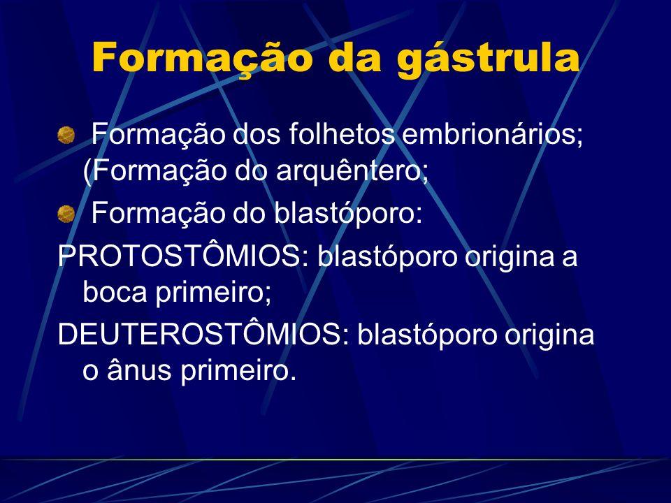 Formação da gástrula Formação dos folhetos embrionários; (Formação do arquêntero; Formação do blastóporo: