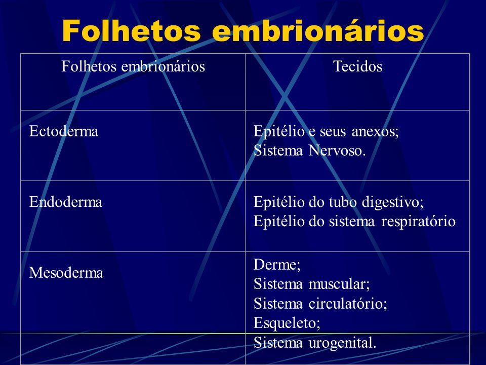 Folhetos embrionários