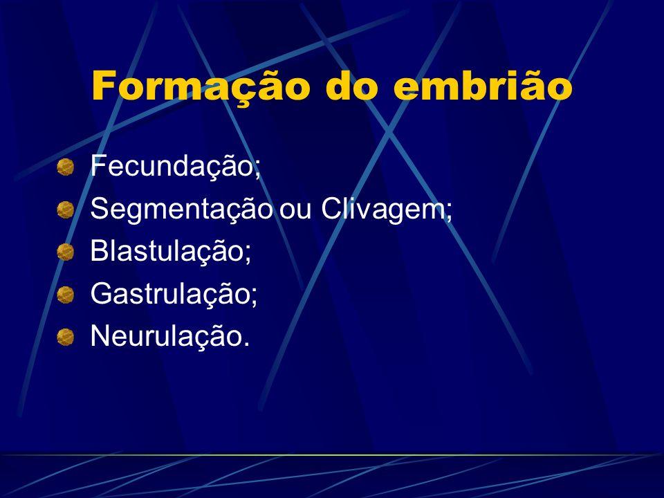 Formação do embrião Fecundação; Segmentação ou Clivagem; Blastulação;