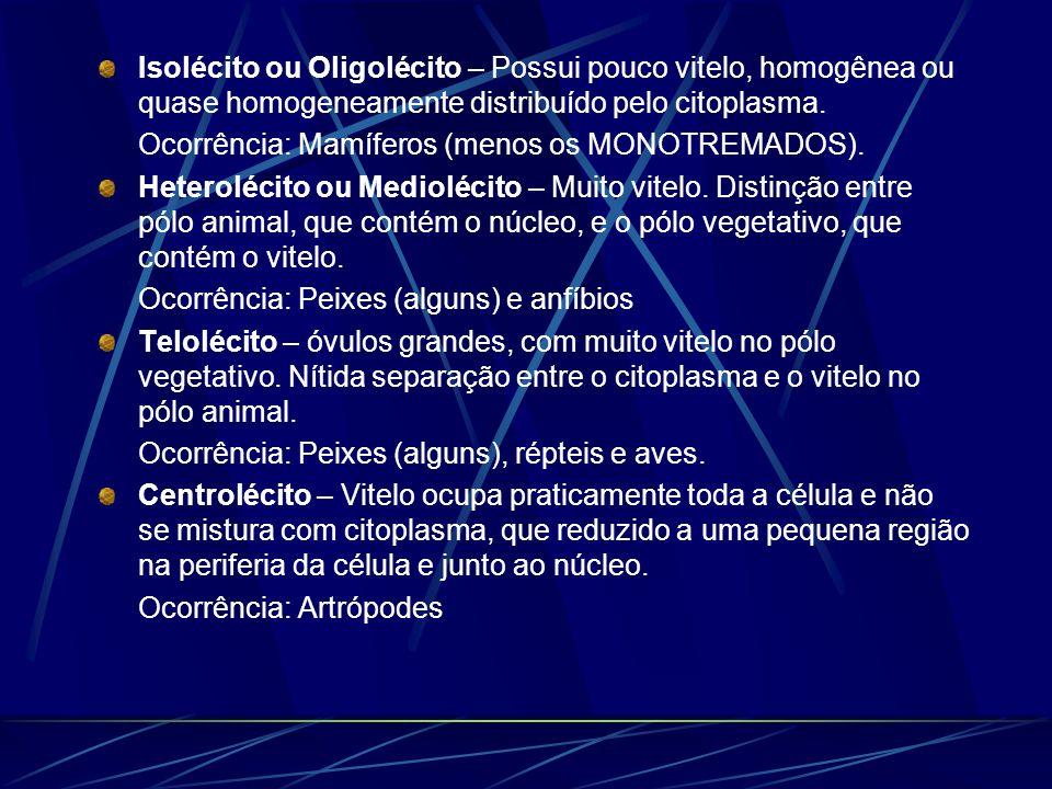 Isolécito ou Oligolécito – Possui pouco vitelo, homogênea ou quase homogeneamente distribuído pelo citoplasma.