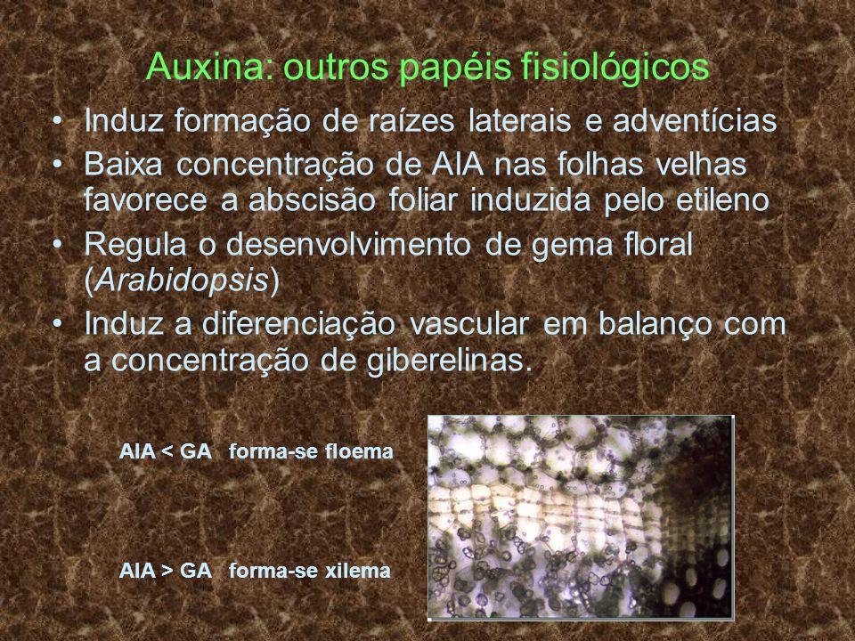 Auxina: outros papéis fisiológicos