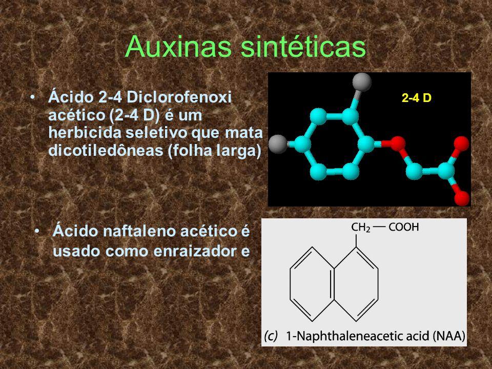 Auxinas sintéticas Ácido 2-4 Diclorofenoxi acético (2-4 D) é um herbicida seletivo que mata dicotiledôneas (folha larga)