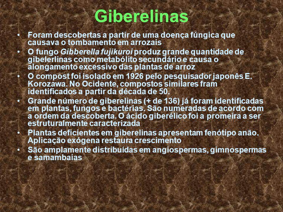 Giberelinas Foram descobertas a partir de uma doença fúngica que causava o tombamento em arrozais.